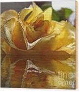 Yellow Rose Wet And Dry Wood Print