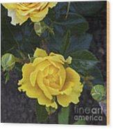 Yellow Roses Wood Print