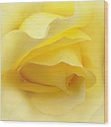 Yellow Roses Triptych Panel Wood Print