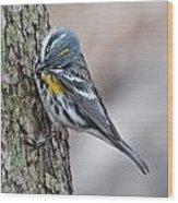 Yellow-rump Warbler Wood Print