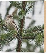 Yellow Rumped Evergreen Wood Print