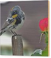 Yellow Rumped Warbler Wood Print by Helen Carson