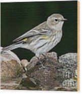 Yellow-rumped Warbler Hen Wood Print