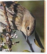 Yellow-rumped Warbler - Precious Wood Print