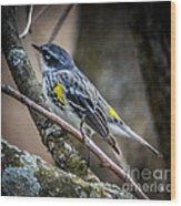 Yellow Rumped Warbler Wood Print
