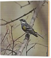 Yellow Rumped Warbler Wood Print