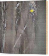 Yellow-rumpled Warbler Wood Print