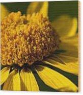 Yellow Saucer Wood Print