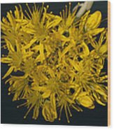 Yellow Sedum Wood Print