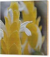 Yellow Shrimp Swirl Wood Print