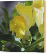 Yellow Snapdragons I Wood Print by Aya Murrells