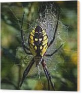 Yellow Spider Wood Print