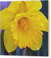 Yellow Spring Daffodil Wood Print