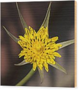 Yellow Star Flower Wood Print