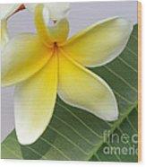 Yellow Star Plumeria Wood Print