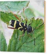 Yellow Stripped Beetle Wood Print