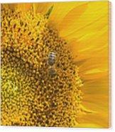 Yellow Sunflower - Detail Wood Print
