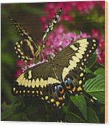 Yellow Swallowtail Butterflies  Wood Print