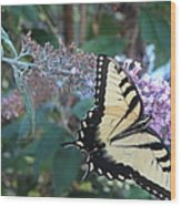 Yellow Swallowtail Butterfly Wood Print