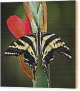 Yellow Swallowtail Butterfly  Wood Print
