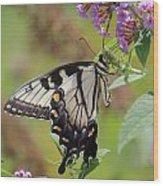 Yellow Swallowtail Butterfly Taking A Drink Wood Print