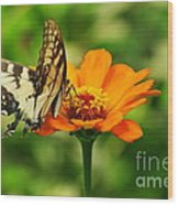 Yellow Swallowtail Wood Print