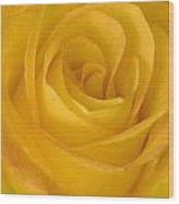Yellow Tea Rose Wood Print by John Pitcher