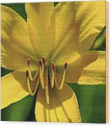 Yellow Too Lily Flower Art Wood Print
