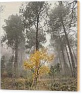 Yellow Tree In The Foggy Forest Wood Print