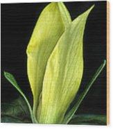 Yellow Trillium Wood Print