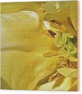 Yellow Tulip Abstract Wood Print