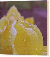 Yellow Tulip Dappled With Rain Wood Print