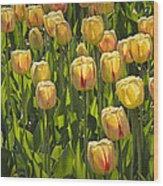 Yellow Tulip Flowers On Windmill Island In Holland Michigan Wood Print