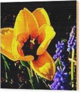 Yellow Tulip Wood Print