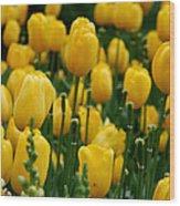Yellow Tulip Sea Wood Print