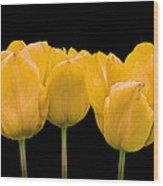 Yellow Tulip Triple Wood Print