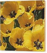 Golden Tulips In Full Bloom Wood Print