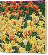 Yellow Tulips In Bloom Wood Print
