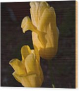 Yellow Tulips Last Rays Wood Print
