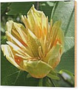 Yellow Tuliptree Flower Wood Print