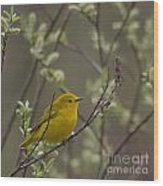 Yellow Warbler -1 Wood Print