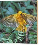 Yellow Warbler Dendroica Petechia Wood Print