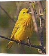 Yellow Warbler Singing Wood Print
