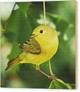 Yellow Warbler Wood Print