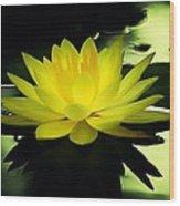 Yellow Waterlily Nc Wood Print