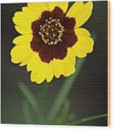 Yellow Wild Flower Wood Print