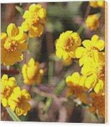 Yellow Wild Flowers Wood Print