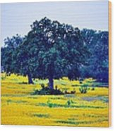 Yellow Wildflowers After Sunrise Wood Print