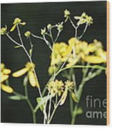 Yellow Wildflowers Wood Print