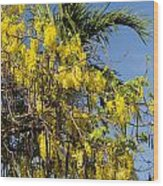 Yellow Wisteria Blooms Wood Print